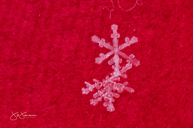 snowflakes-2309.jpg