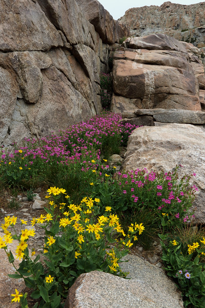 Rock and Flower Garden.jpg