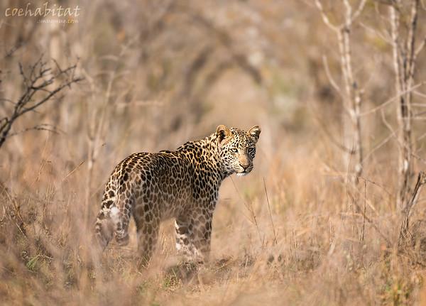 Kruger NP 2015