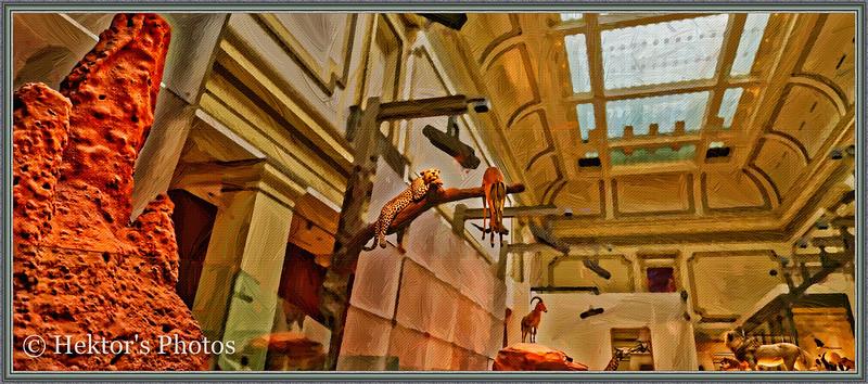 National History Museum-19.jpg