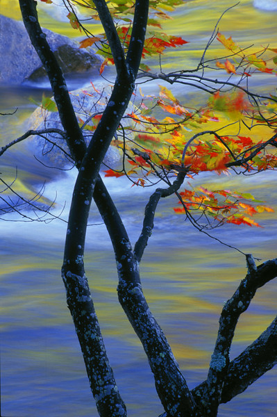 Fall branches against the Kancamagus river