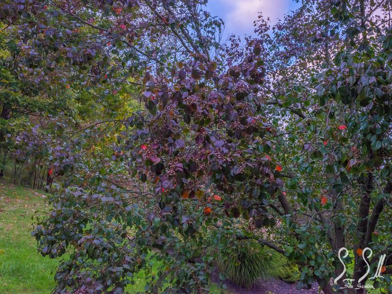 edited- tree.JPG