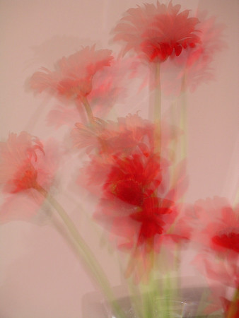 Flowers Abstract