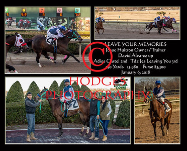 Quarter Horse 2018 Season