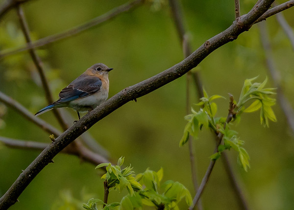 Birding Trip to Southern Indiana