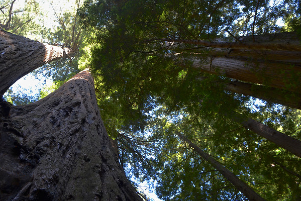 Heritage Redwood Grove - San Mateo County Parks