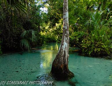 Wekiwa River Paddle