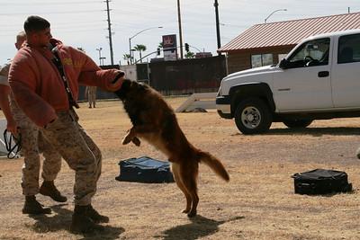 Marine Corp Dog Training