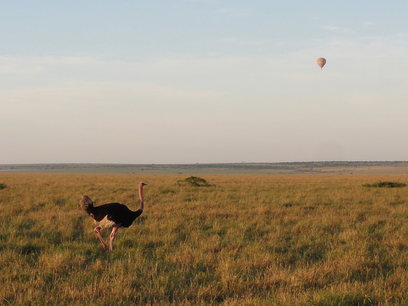 East Africa Safari 218.jpg