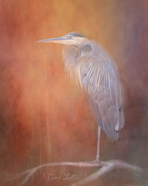 DSCN0190 Blue Heron with texture2 16x20 signed.jpg