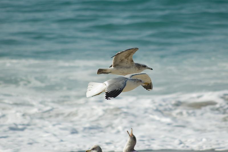 gulls (8).jpg