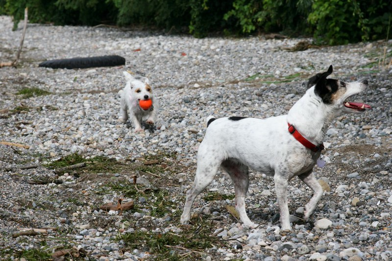 farley pups 065-2 (1).jpg