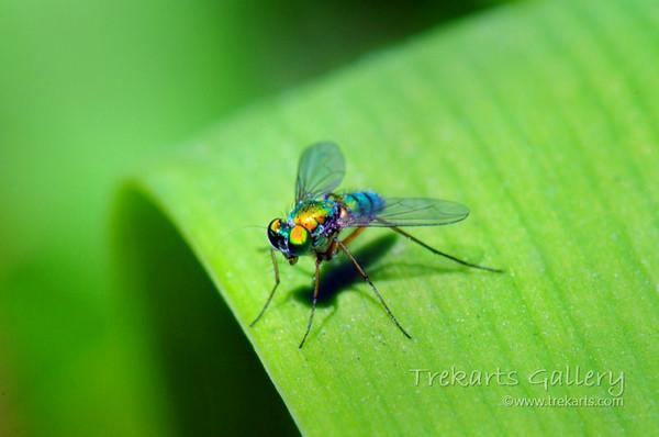 101 Bugs