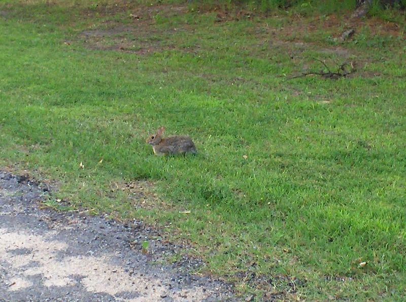 bunny 5-27-05.JPG