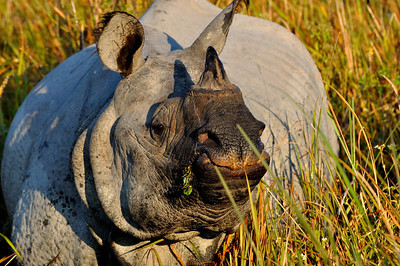 Kaziranga National Park, Assam, India