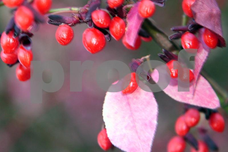 berries3.jpg