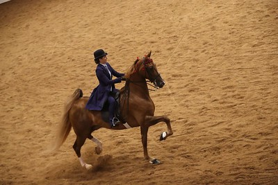 121. ASB Five Gaited STAKE – Amateur