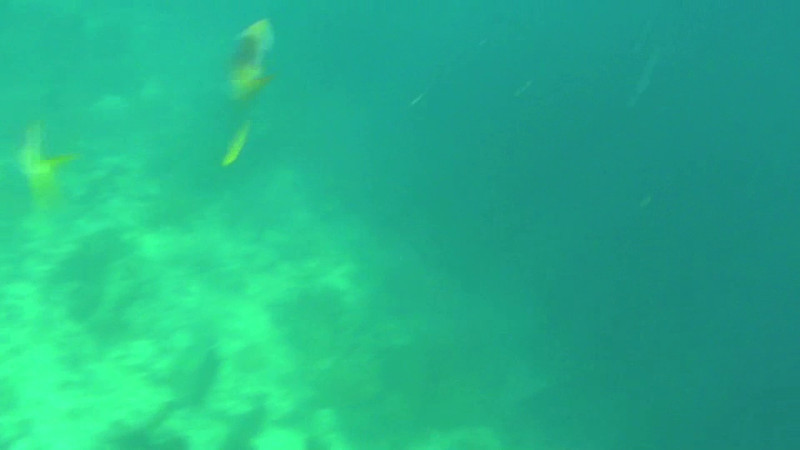 Jelly Fish, Florida Keys