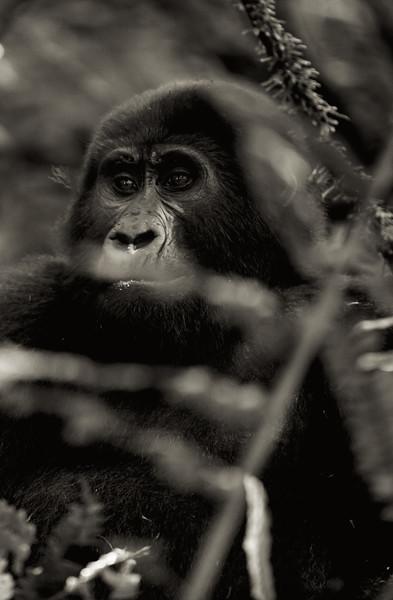 Uganda_T_Gor-604.jpg