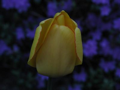 2008-06-02-0954-31