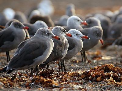 Cambria Birds