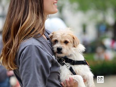 'Animal Lighthouse Rescue' Sato Reunion @ Madison Square Park 4.30.17