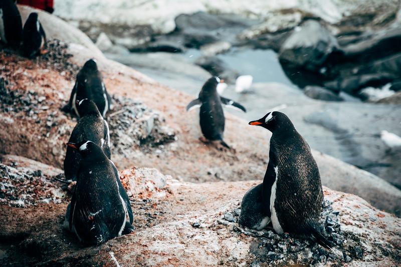 _MG_6584_20170121_Antarctica.jpg