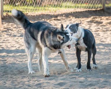 December 20: Dog Park