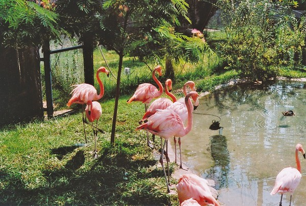 Sunset Zoo 2005