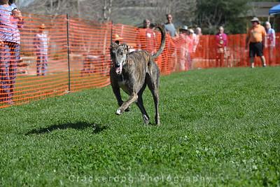 2016 Solvang Greyhound Fest