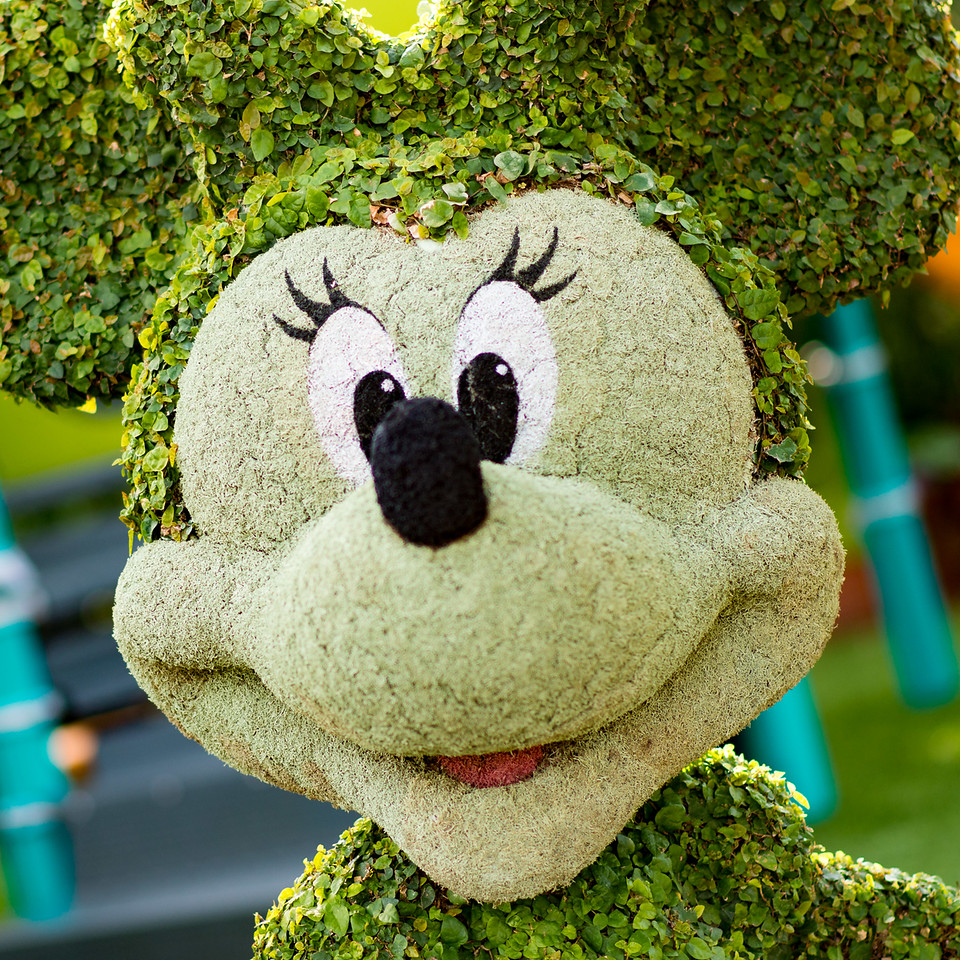 Mickey Mouse Topiary - Epcot Flower & Garden Festival 2016
