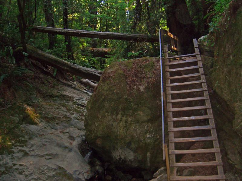The ladder along Steep Ravine Trail, Mt. Tamalpais State Park