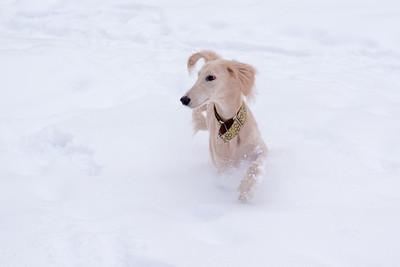 Snow Hounds 22-01-11