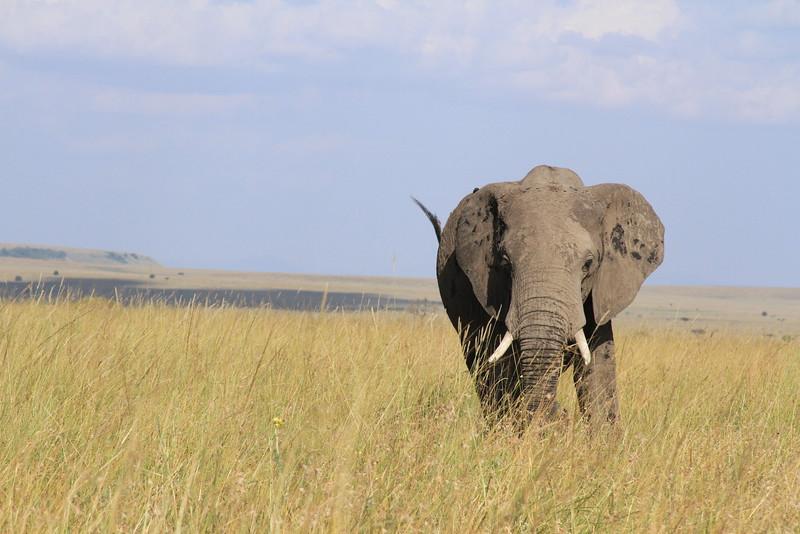Kenya Part2 '15 028.JPG