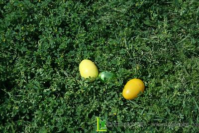 2012 Senior Easter Egg Hunt