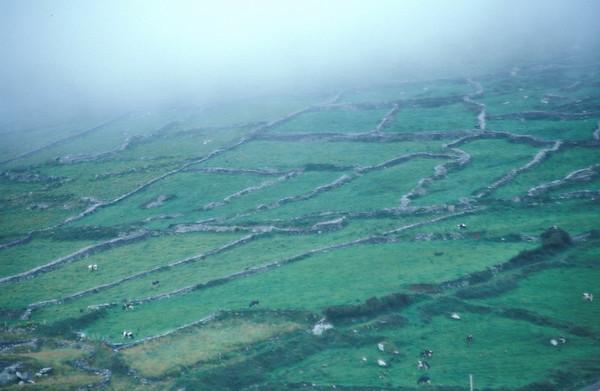 Grasland in Ireland, Ring of Kerry