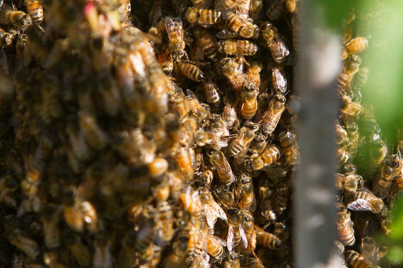 swarm_052214_001.jpg