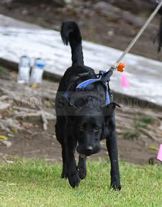 3-3-18 Dog 32