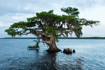 Lake Blue Cypress & Myakka River State Park