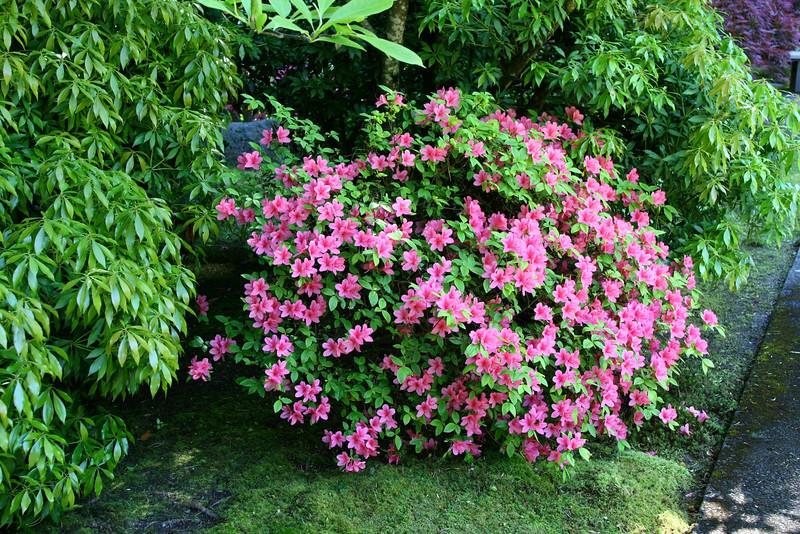 Portland Japanese Garden 6-3-11  1777.jpg