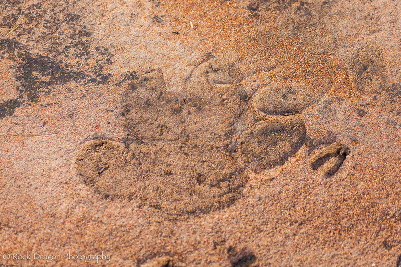 2_North_Serengeti-27.jpg