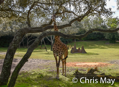 Animal Kingdom 18-66.jpg