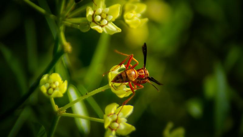 Bugs and Beetles - 29.jpg