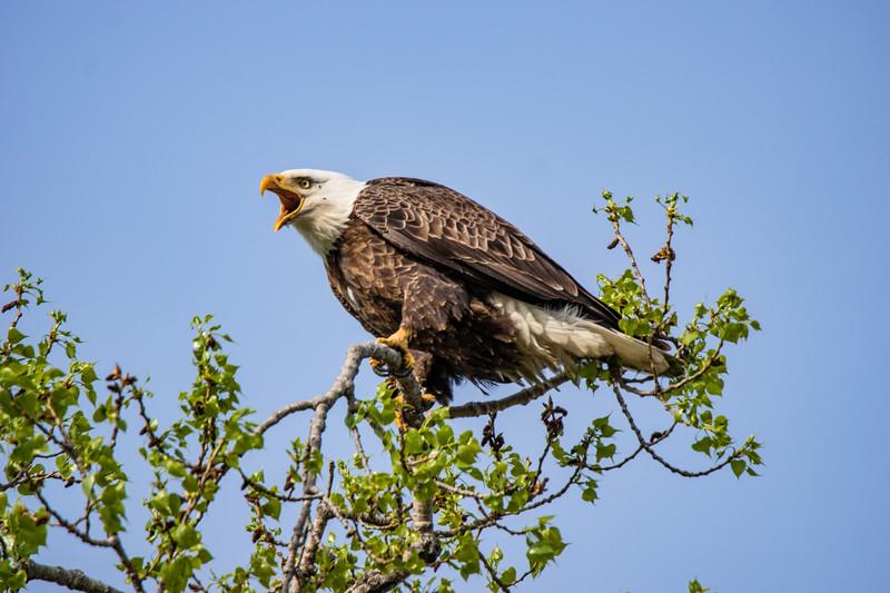 a Eagle no Wm_-2.JPG