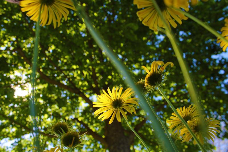 Spring at Manito Park