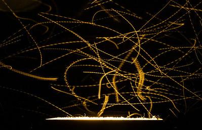 Bugs at Neff Park Spotlight
