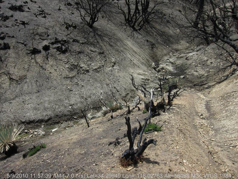 20100509072-Trail Recon, Vetter Mountain Trail.JPG