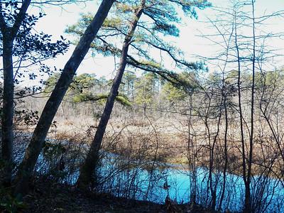 Severn Run Natural Environmental Area