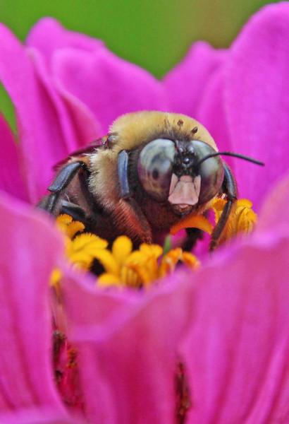 Bumble bee 53