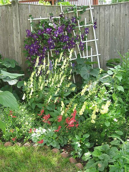 garden-2005-07-0242_std.jpg